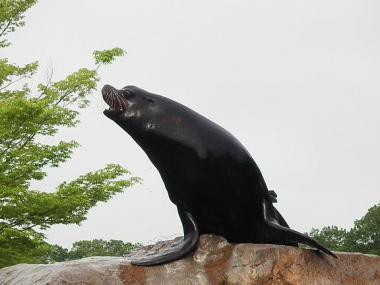 いしかわ動物園 カリフォルニアアシカ