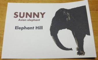 いしかわ動物園 自作ポストカード