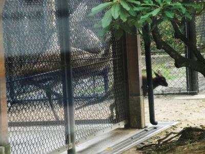 いしかわ動物園 アカクビワラビー エミュー