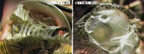 いしかわ動物園 ナイトズー 2010