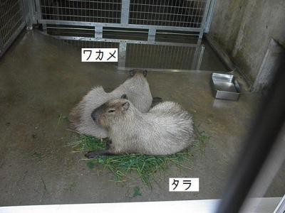 いしかわ動物園