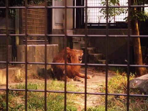 いしかわ動物園 ナイトズー