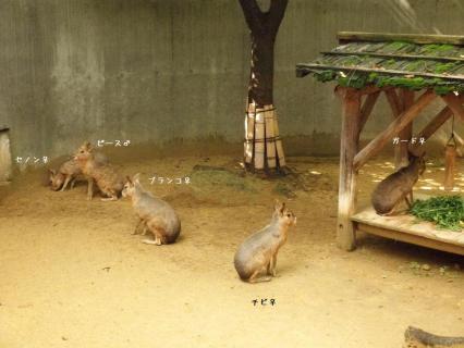 いしかわ動物園 マーラ