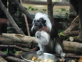 いしかわ動物園 南米の森