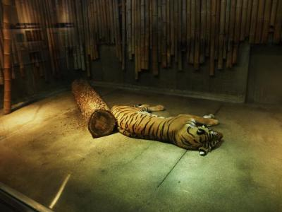 いしかわ動物園 ネコたちの谷