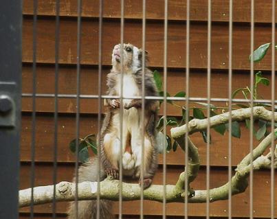 いしかわ動物園 ムササビ