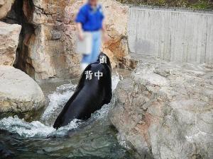 いしかわ動物園 アシカ・アザラシたちのうみ