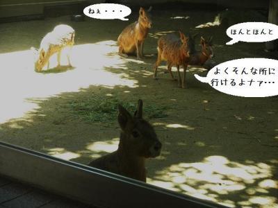 いしかわ動物園 小動物プロムナード