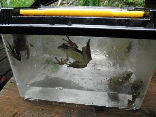 いしかわ動物園 友の会 カエル ホタル