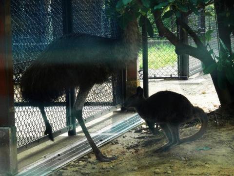 いしかわ動物園 エミュー アカクビワラビー