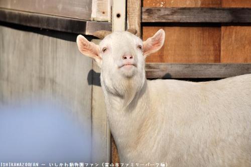 富山市ファミリーパーク シバヤギ