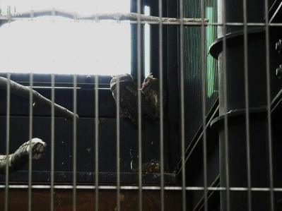 いしかわ動物園 水鳥たちの池 バードストリート