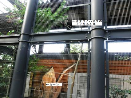 いしかわ動物園 オオコノハズク