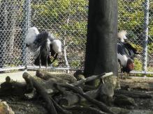 いしかわ動物園 ホオジロカンムリヅル