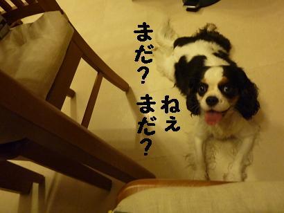 20100609_02.jpg