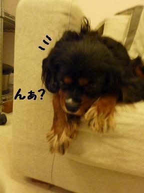 20100612_01.jpg