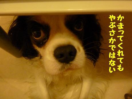 20110108_04.jpg