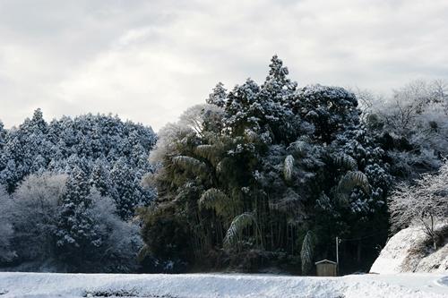 2012.1.24 初雪 006