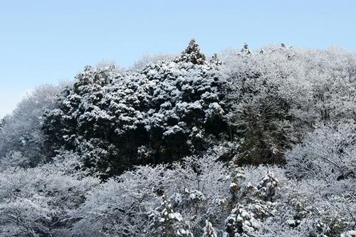 2012.1.24 初雪 002