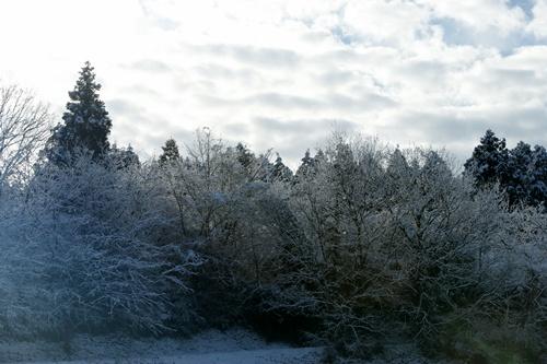 2012.1.24 初雪 011