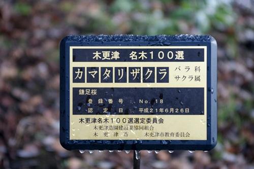 2012.1.24 初雪 038