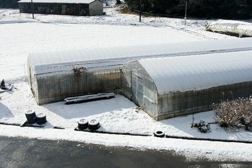 2012.1.24 初雪 047