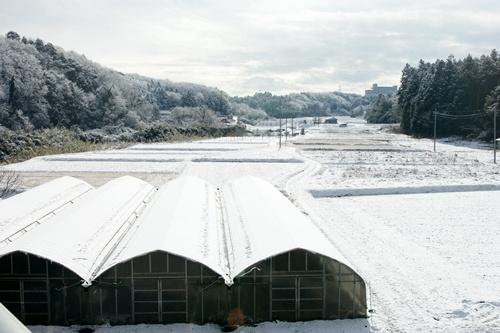 2012.1.24 初雪 048
