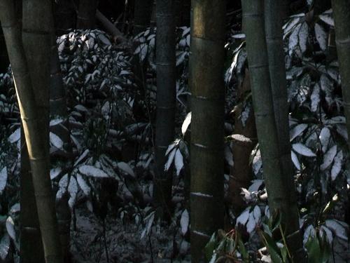 2012.2.18 2回目の雪 007
