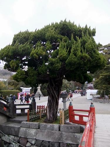 2012.3.4 鎌倉散策 鶴岡八幡宮111 (19)