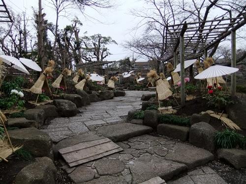 2012.3.4 鎌倉散策 鶴岡八幡宮ボタン園111 (19)