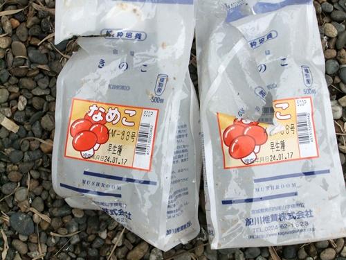 2012.3.19 なめこの菌打ち 018 (6)