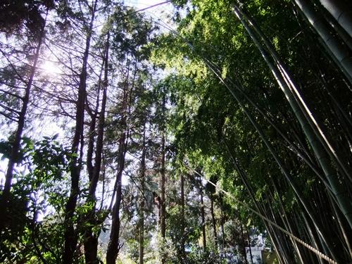 2012.4.8庭木の剪定 040 (1)