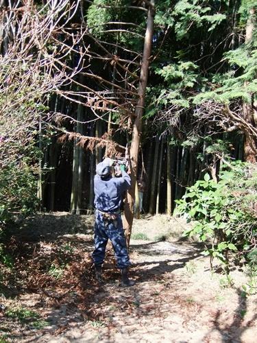 2012.4.8庭木の剪定 040 (12)