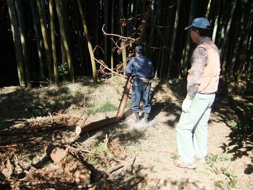 2012.4.8庭木の剪定 040 (17)