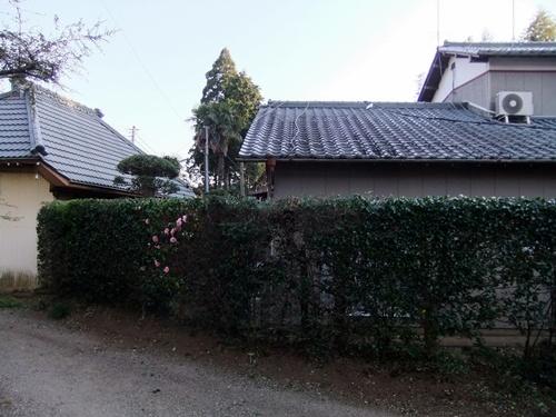 2012.4.8庭木の剪定 040 (24)
