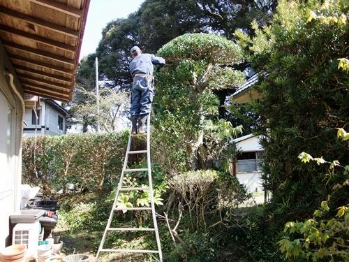 2012.4.8庭木の剪定 040 (20)