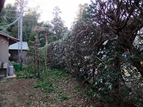 2012.4.8庭木の剪定 040 (22)