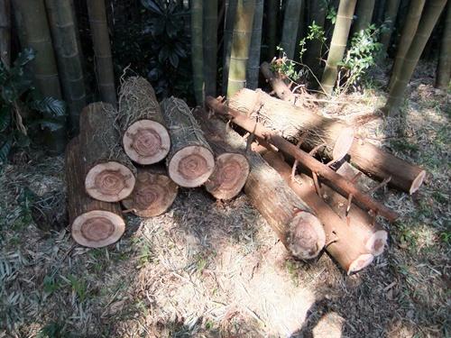 2012.4.8庭木の剪定 040 (19)