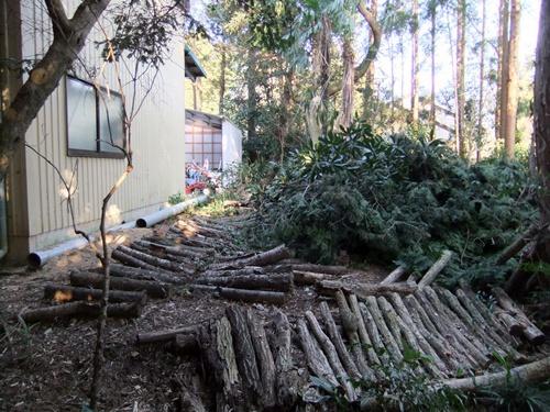 2012.4.8庭木の剪定 040 (28)