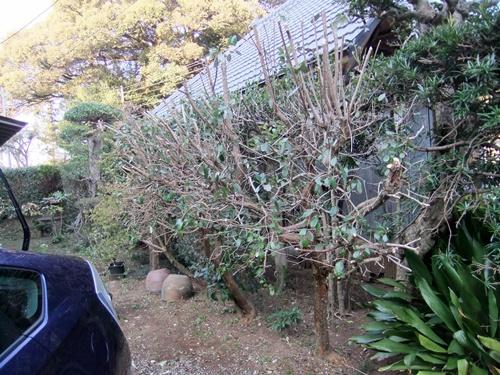 2012.4.8庭木の剪定 040 (34)