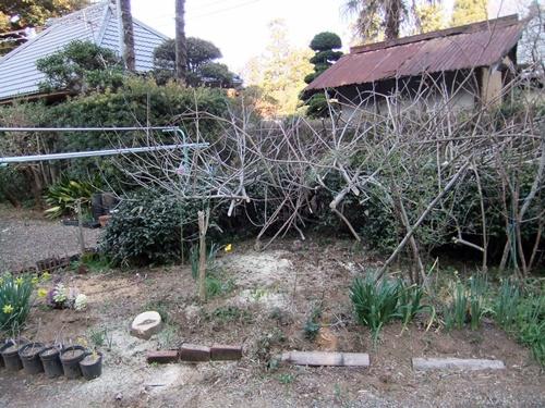 2012.4.8庭木の剪定 040 (33)