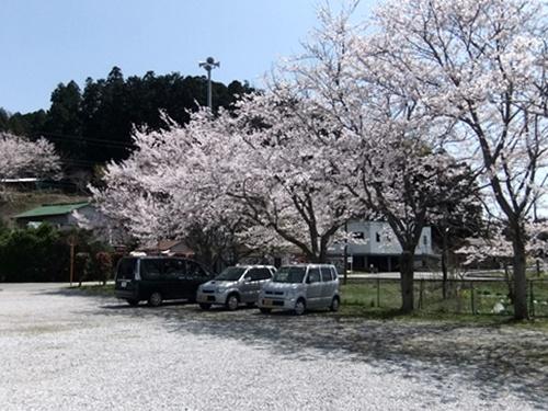 2012.4.21 鎌足公民館の桜 005 (2)