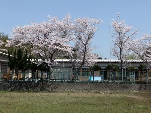 2012.4.21 鎌足公民館の桜 005