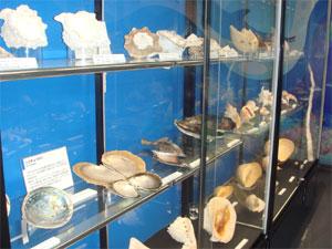 火山博物館5