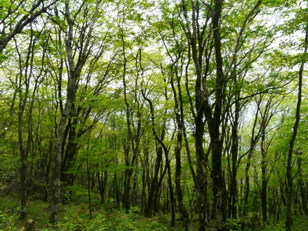 天狗の森 新緑 2