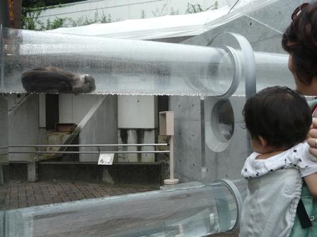 とべ動物園 コツメカワウソ 2