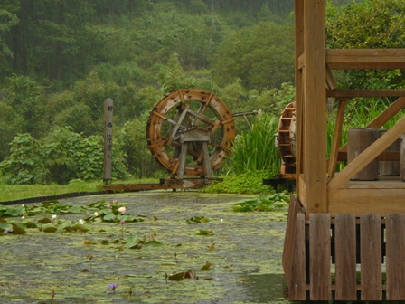 高知県中土佐町大野見 スイレン と 水車 2