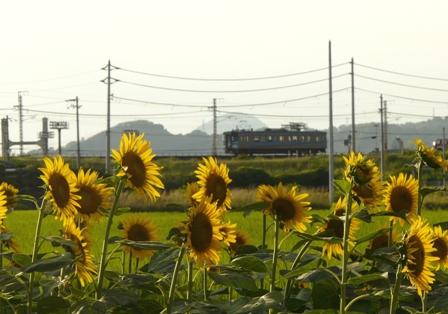 ヒマワリ & 電車