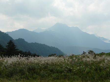 ススキ と 石鎚山