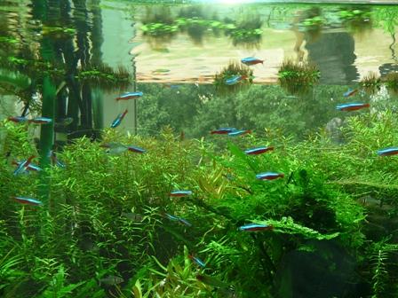 筑波実験植物園 水槽